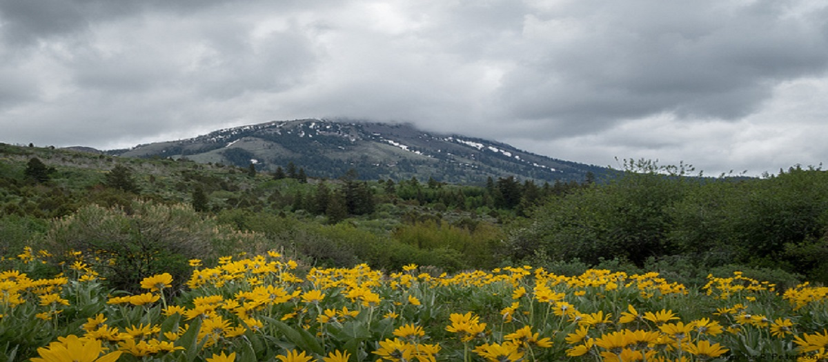Flowers, trees, and clouds surround a low mountain.
