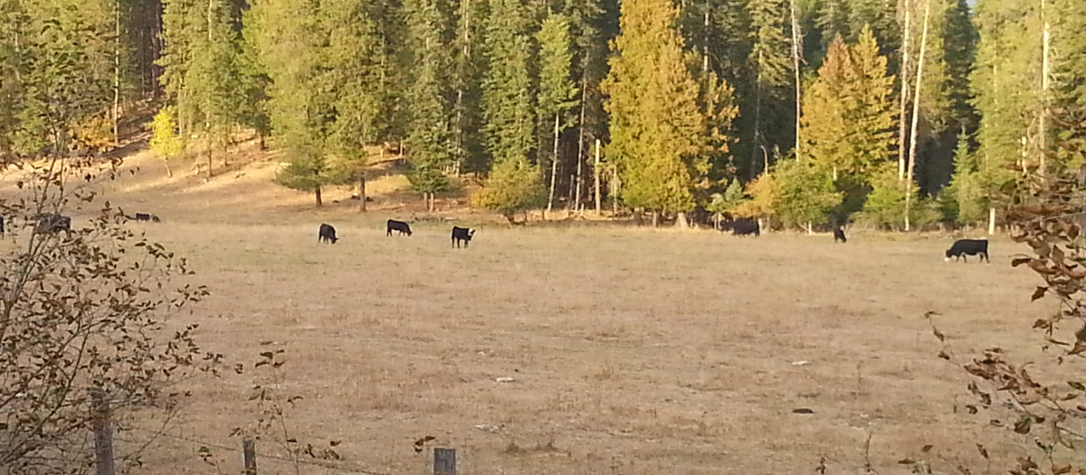 Grazing at the edge of the forest.