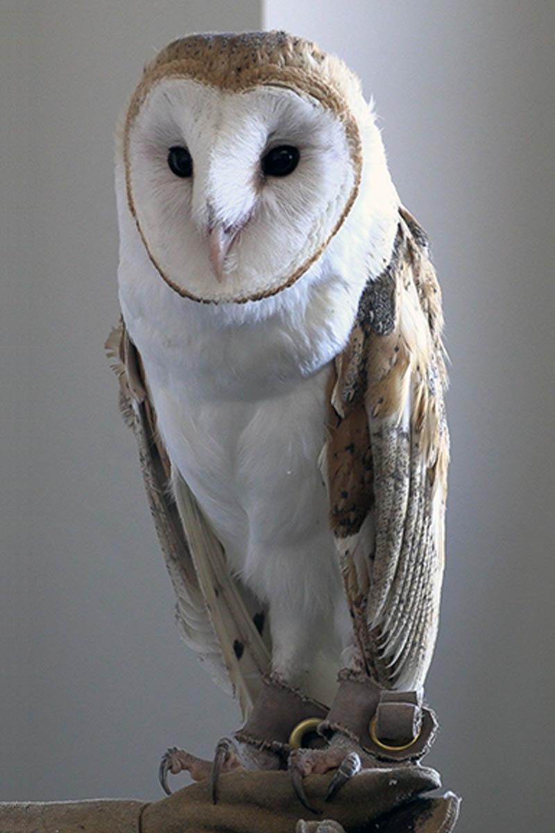 Barn Owl Research Ui Extension In Minidoka County