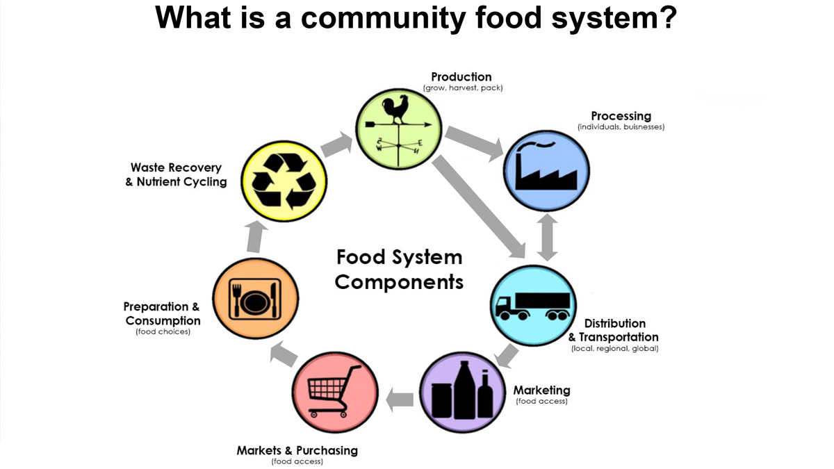 What is a community food system? Components  include production (grow, harvest, pack), which feeds into processing (individuals and businesses) and distribution & transportation (local, regional, global). These feed into food access components of marketing and markets & purchasing, then to food choices (preparation & consumption). Finally, waste recovery & nutrient cycling flow back into production.
