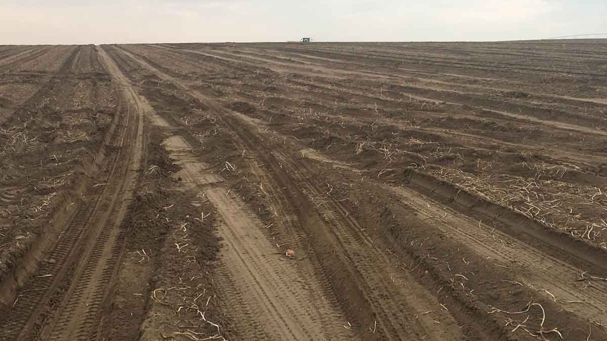 Field in Elmore County after potato harvest, September 2017.