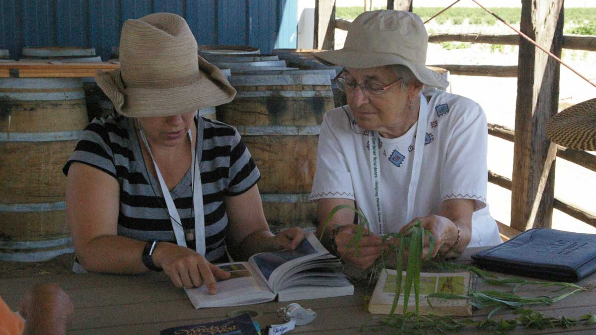 two ladies investigating leaves of a plant