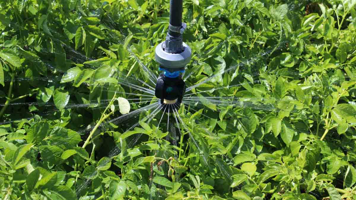 A sprinkler is shown, one of several methods of irrigation are used to feed crops in south central Idaho and at the University of Idaho Kimberly Research and Extension Center