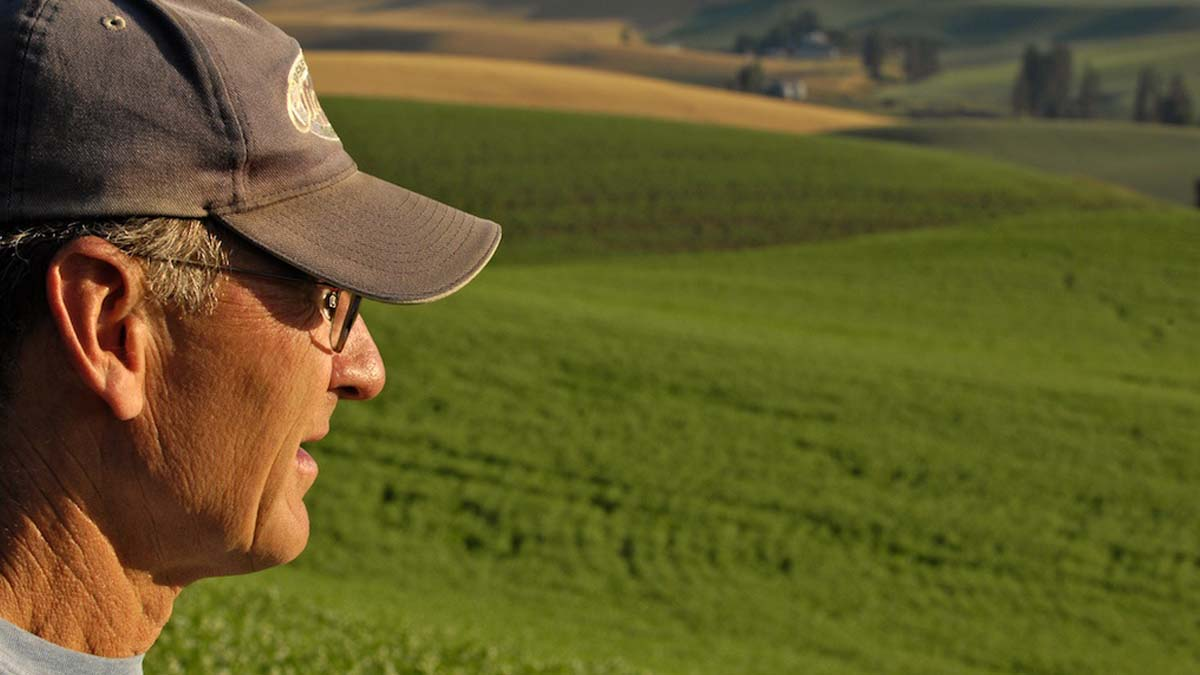 Alumnus Russell Zenner looks over a green wheat field