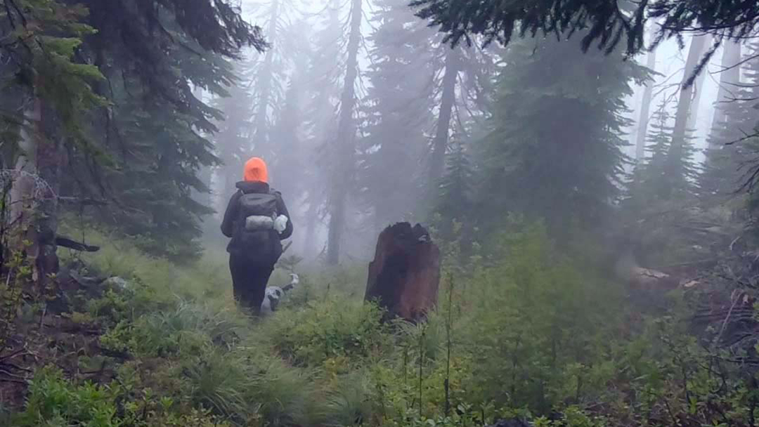 A hiker and their dog walk on the Selkirk Mountains.