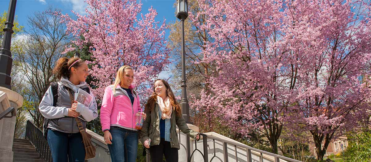 Brightly lit pink trees and U of I students