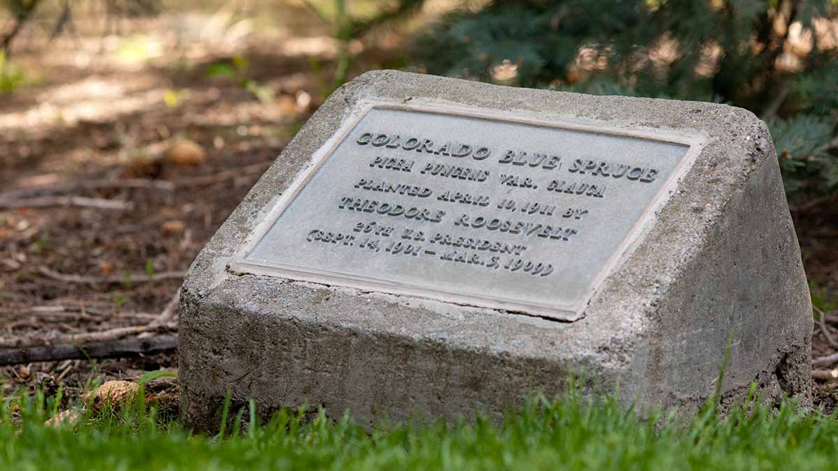 uidaho commemorative tree program creates lasting legacy