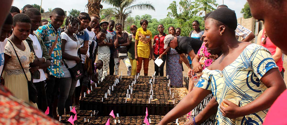 Villagers in Togo, Africa, learn about seedlings.