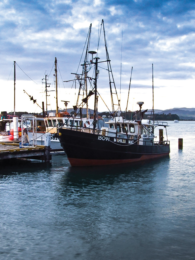 Fishing Boat Moored in New Zealand