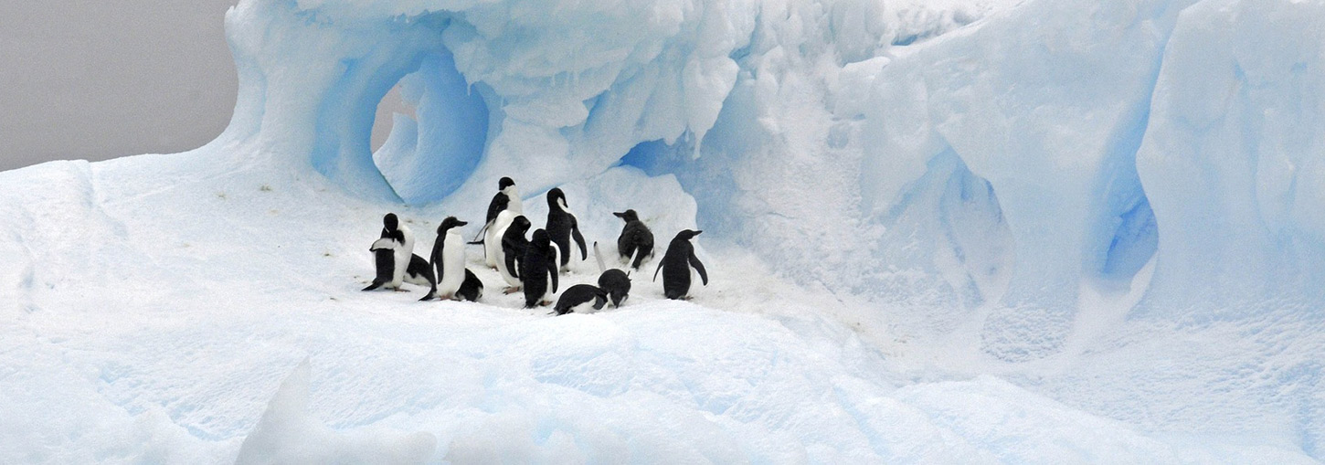 Penguins on an iceberg in Antarctica