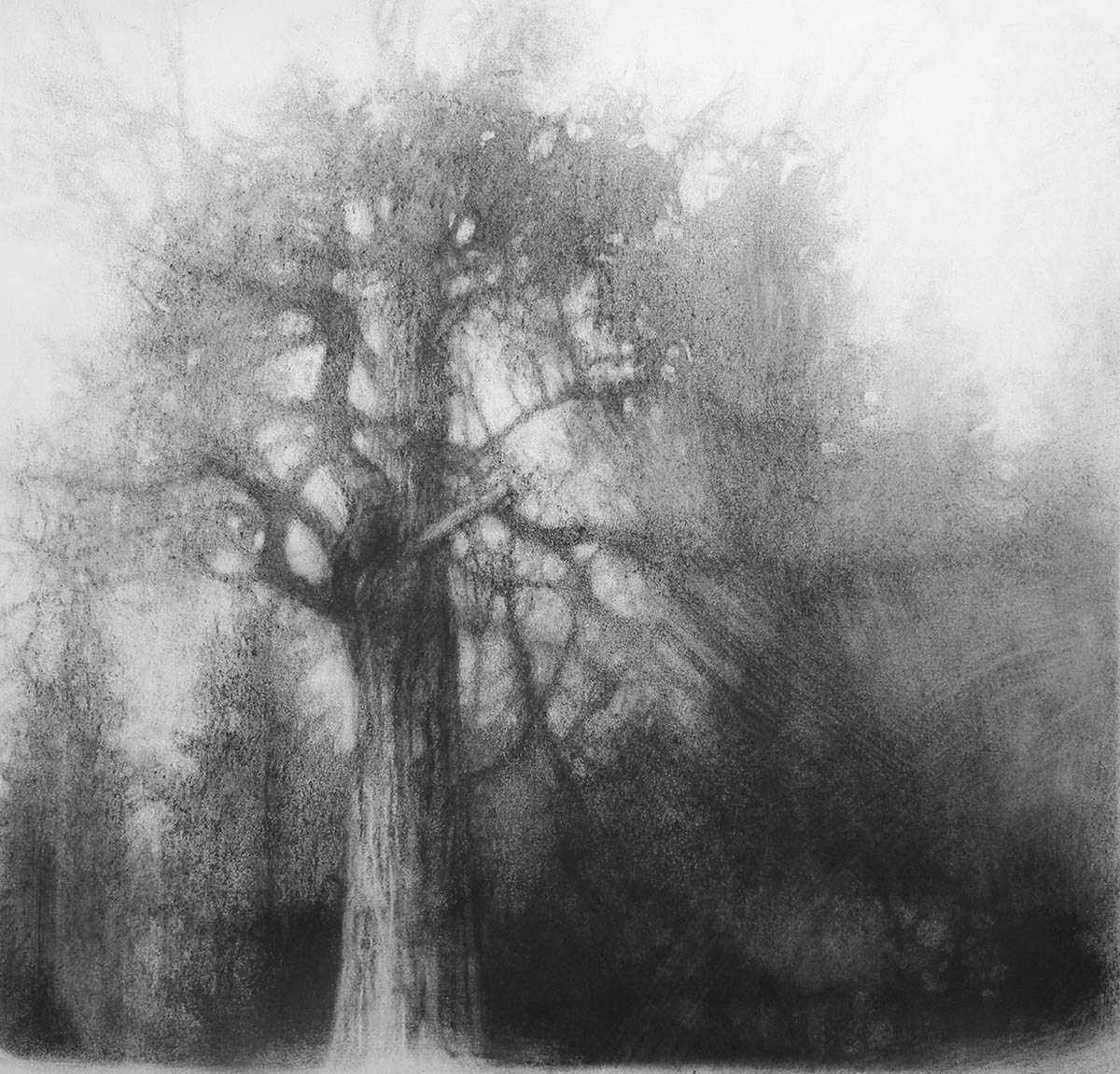 Charcoal drawing of a tree by Elaine Green.