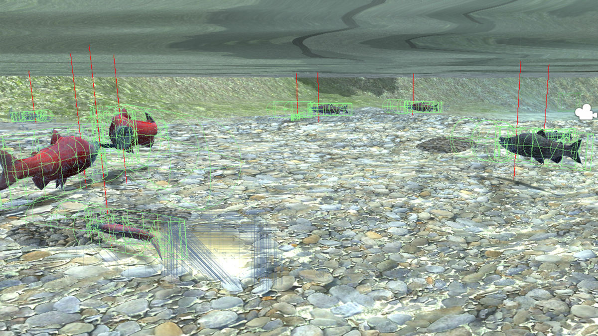 A screenshot from the Salmon Sim virtual environment, showing several salmon swimming underwater.