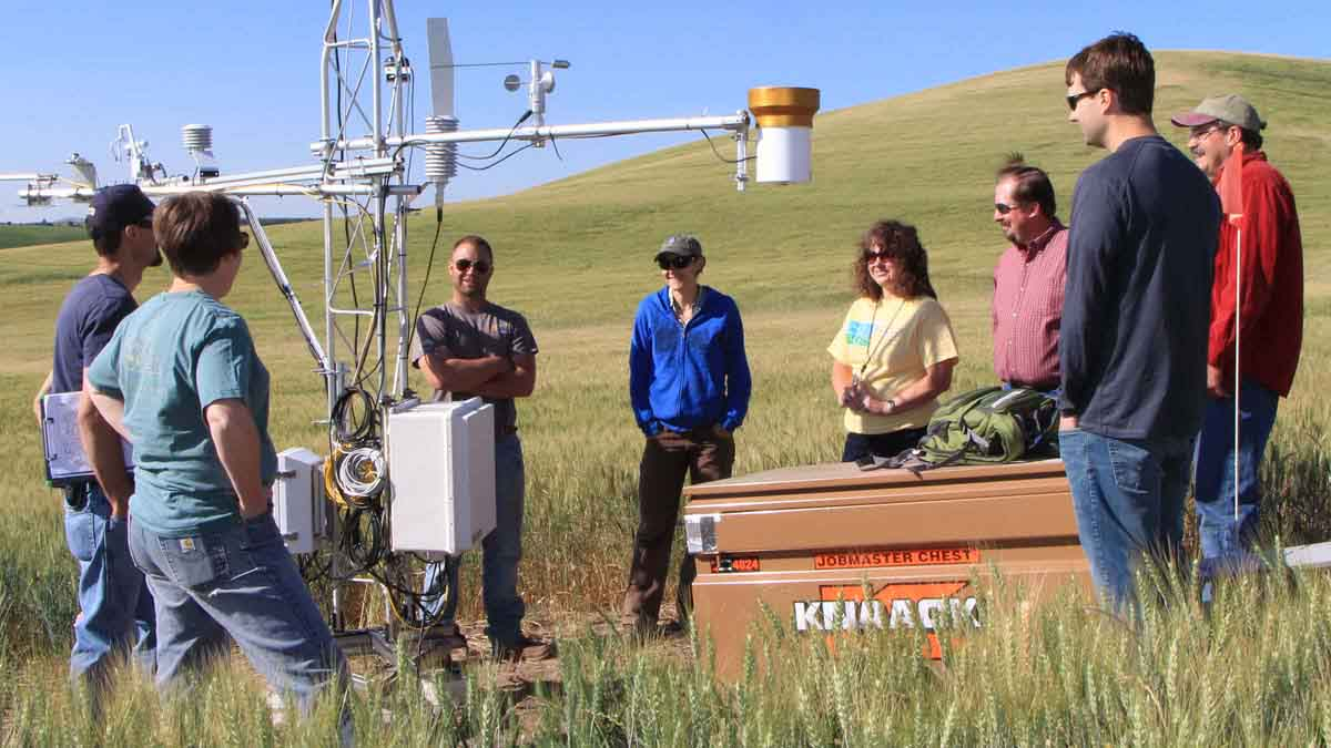 CALS scientist receives $3.4 million grant to help wheat farmers adapt to changing conditions