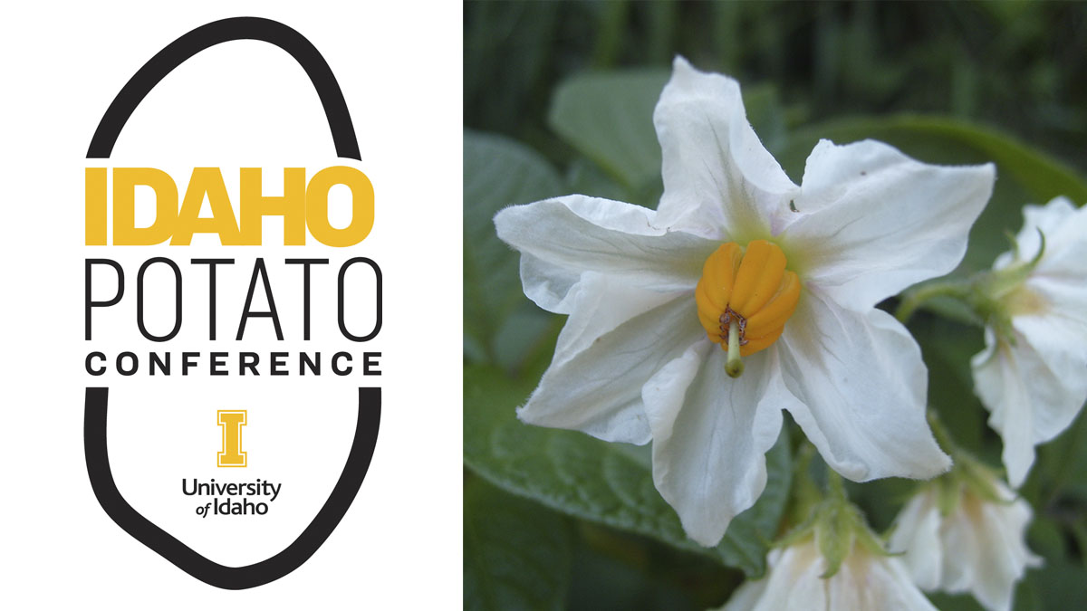 potato conference logo and potato bloom