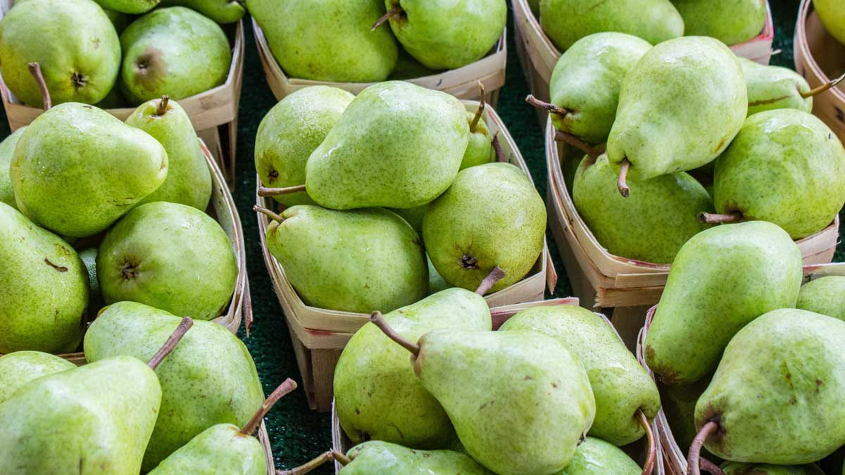 Lot of pears in crates