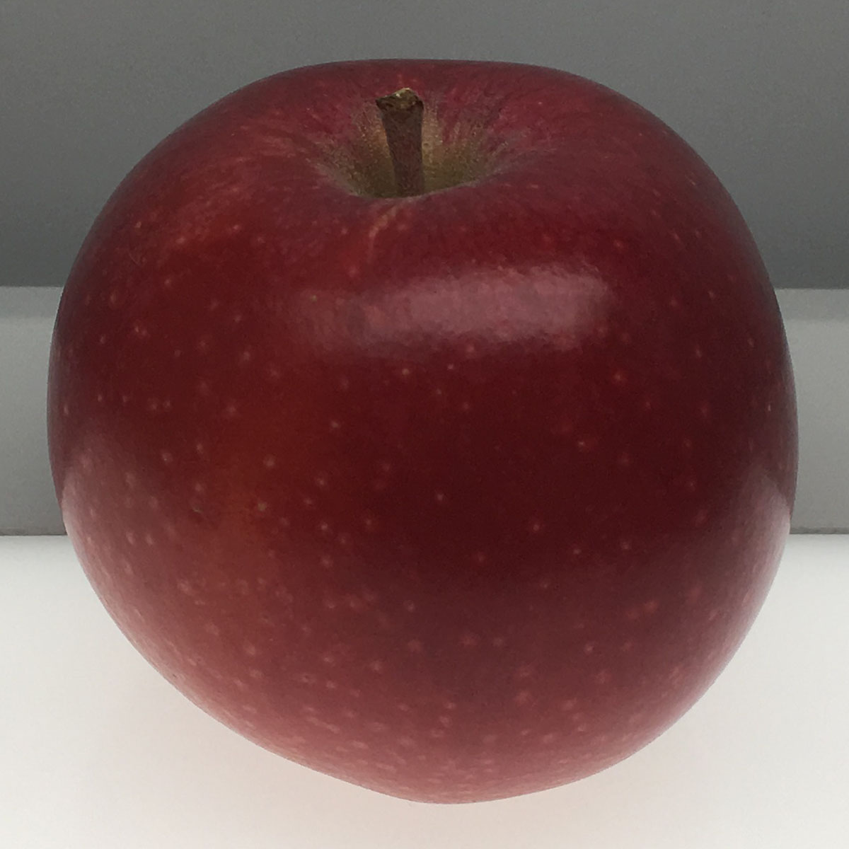 Hauer Pippin apple