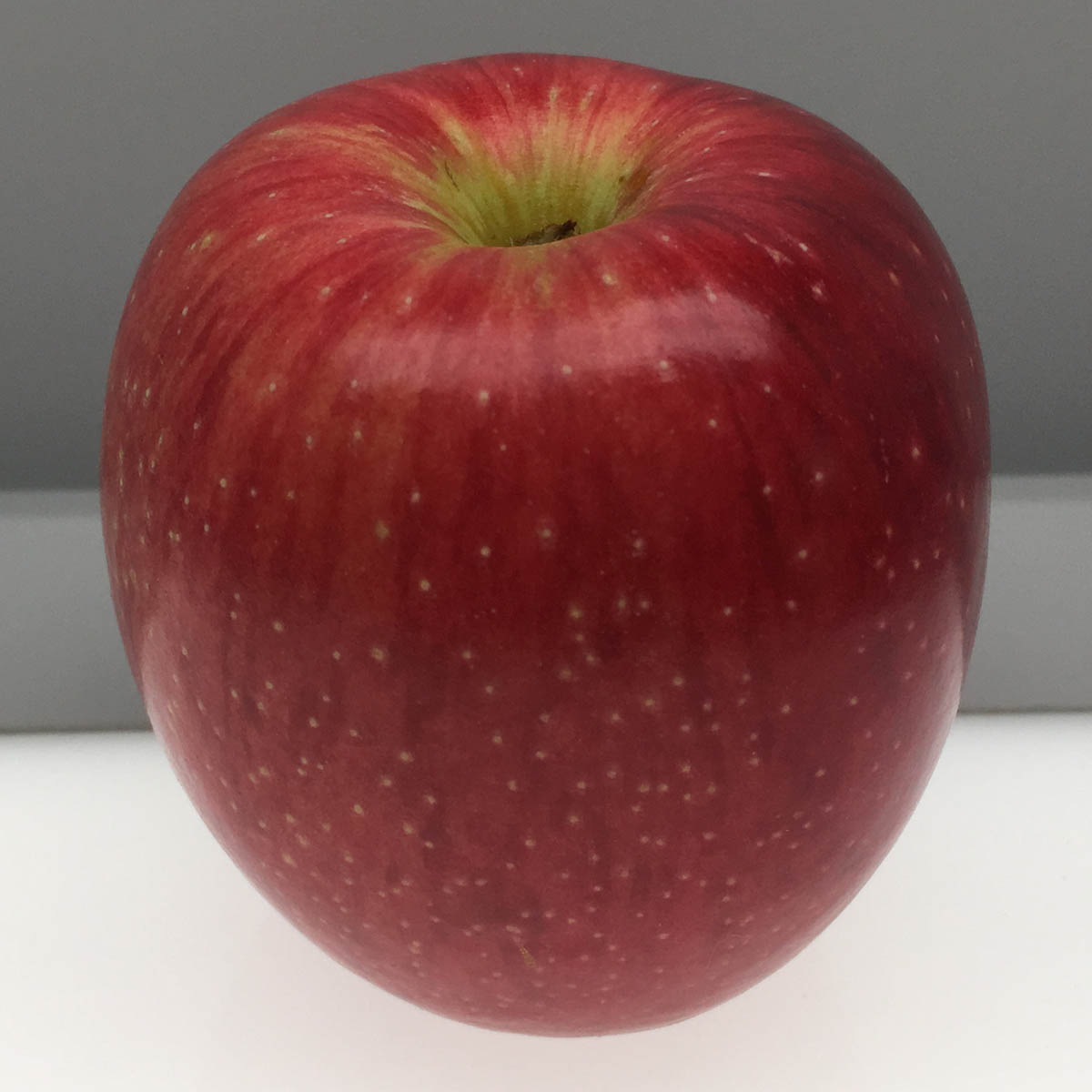 Ramsdell Sweet apple