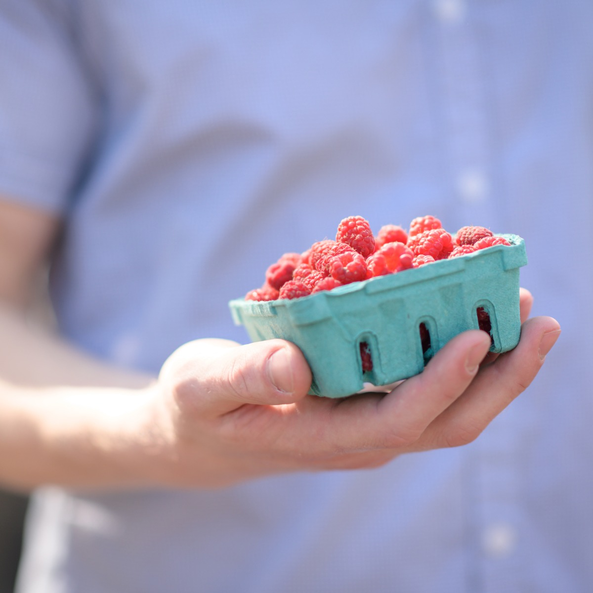 A hand holds a basket of ripe berries.