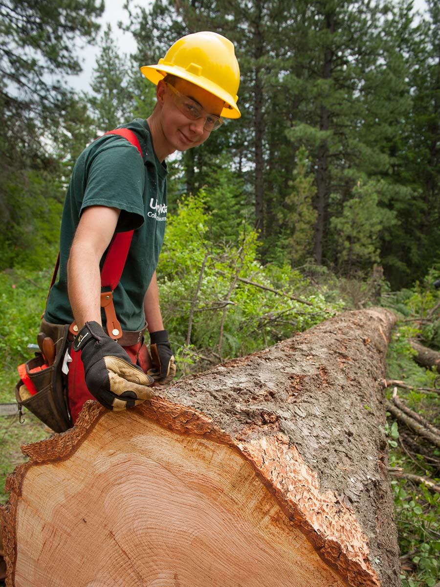 earn pay while learning forest management techniques