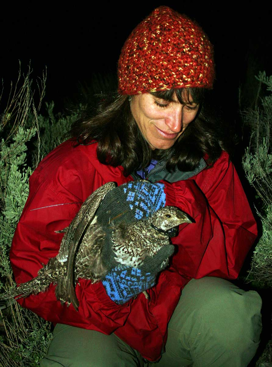 Lisette Waits works with a grouse as part of her research.