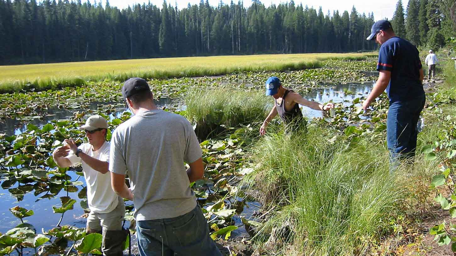 Students conduct research on a wetland area
