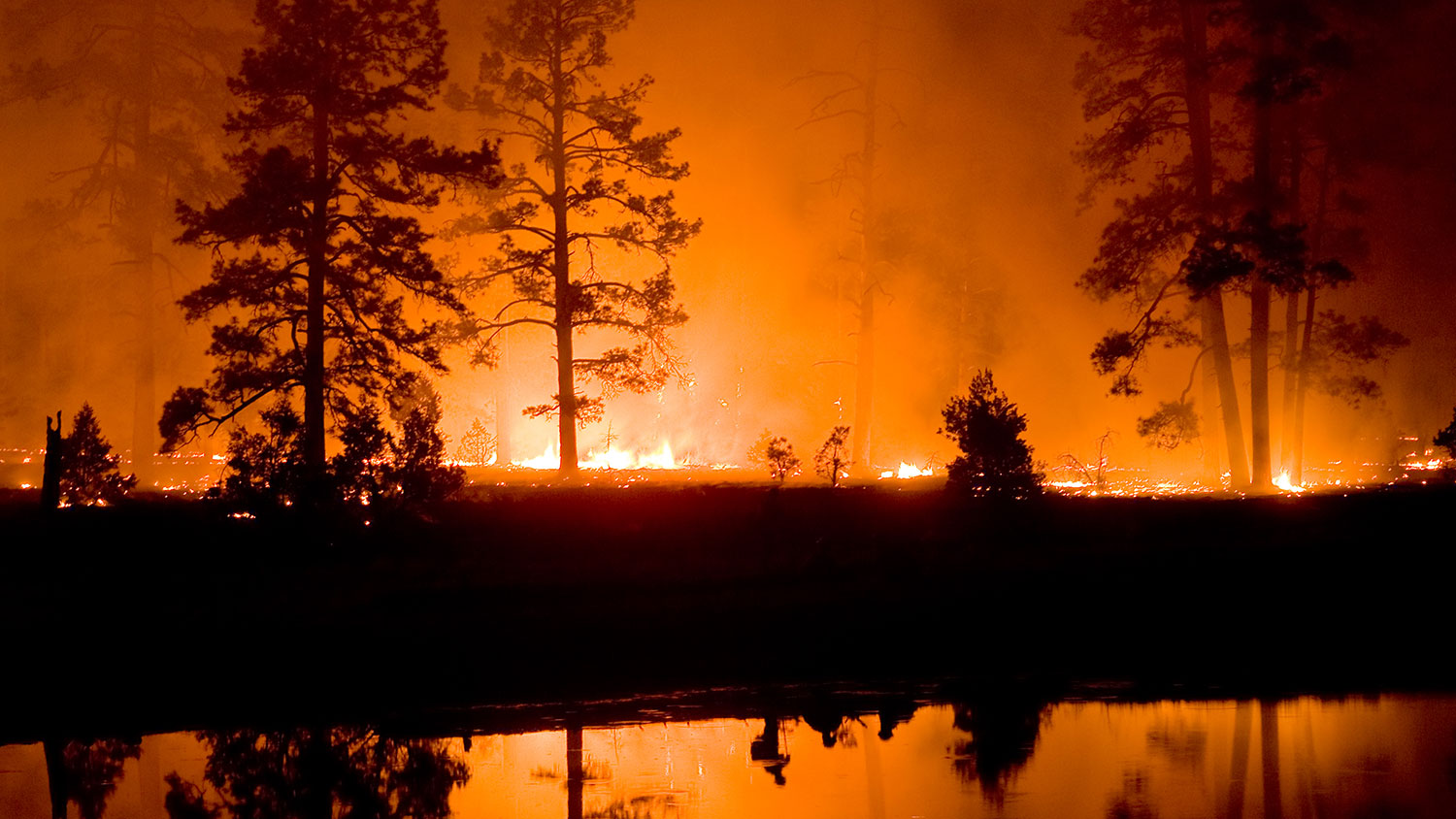 Learn to manage the factors that contribute to wildfires
