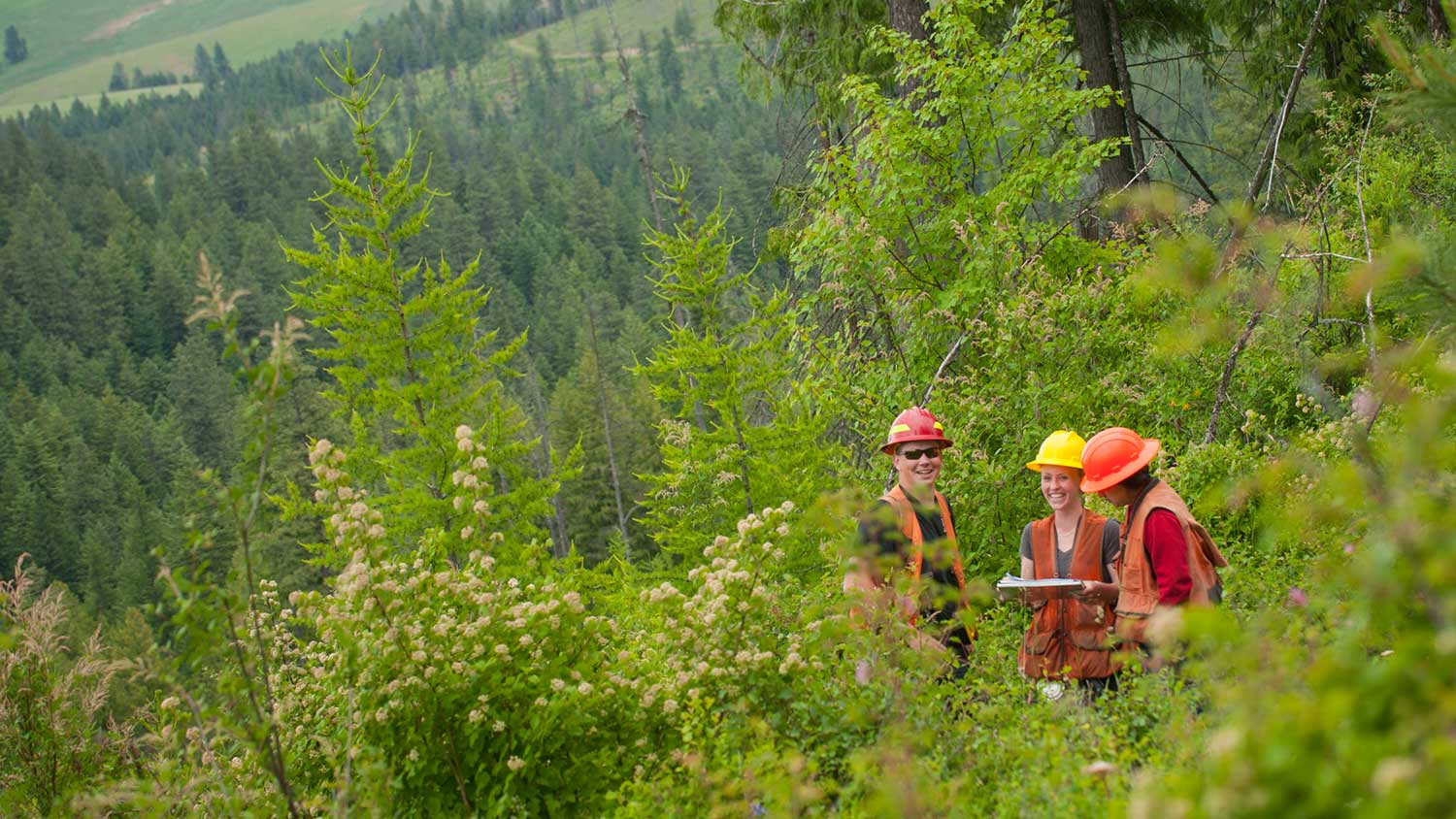 Get hands-on with forest management and issues in our student-run Experimental Forest