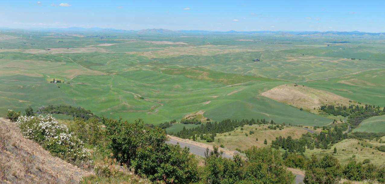 Palouse scenery