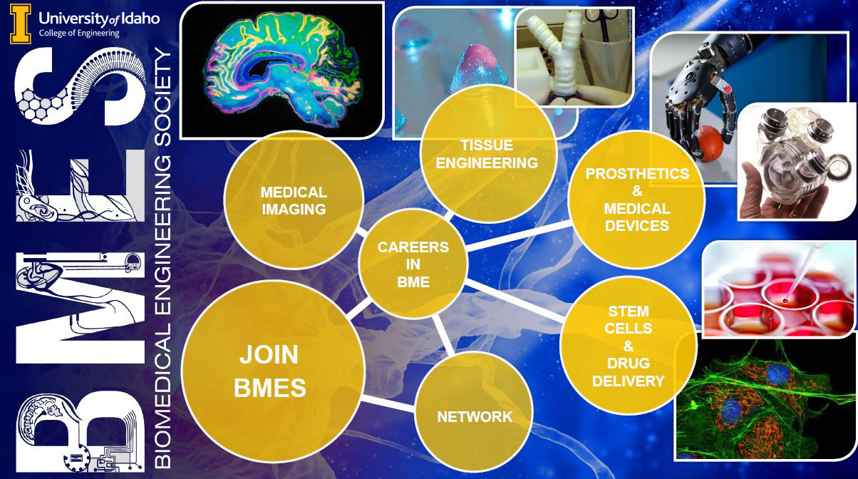 Join the University of Idaho BioMedical Engineering Society to network and learn about careers in medical imaging, tissue engineering, prosthetics, medical devices, stem cells, and drug deliver.