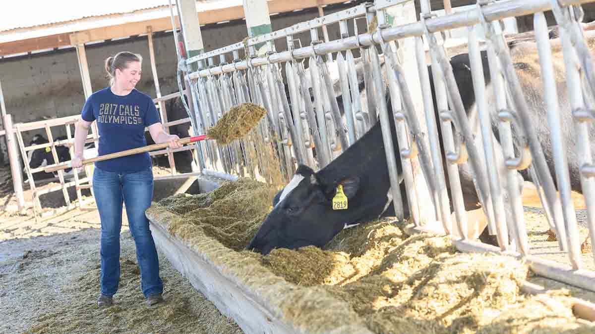 Allison Stevens investigates how to reduce nitrogen emissions in dairy cattle while maintaining milk production.