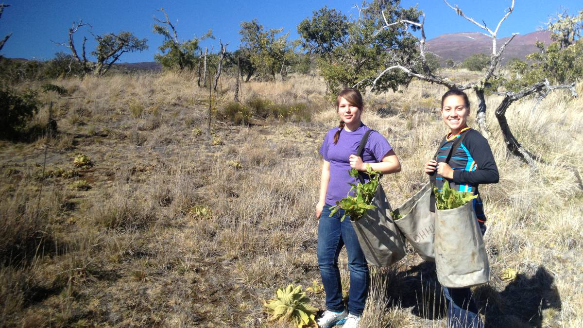 A native woman and CNR student work together to gather naturally grown produce.