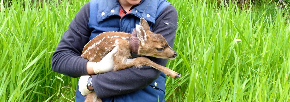 Sophie Gilbert holds a fawn