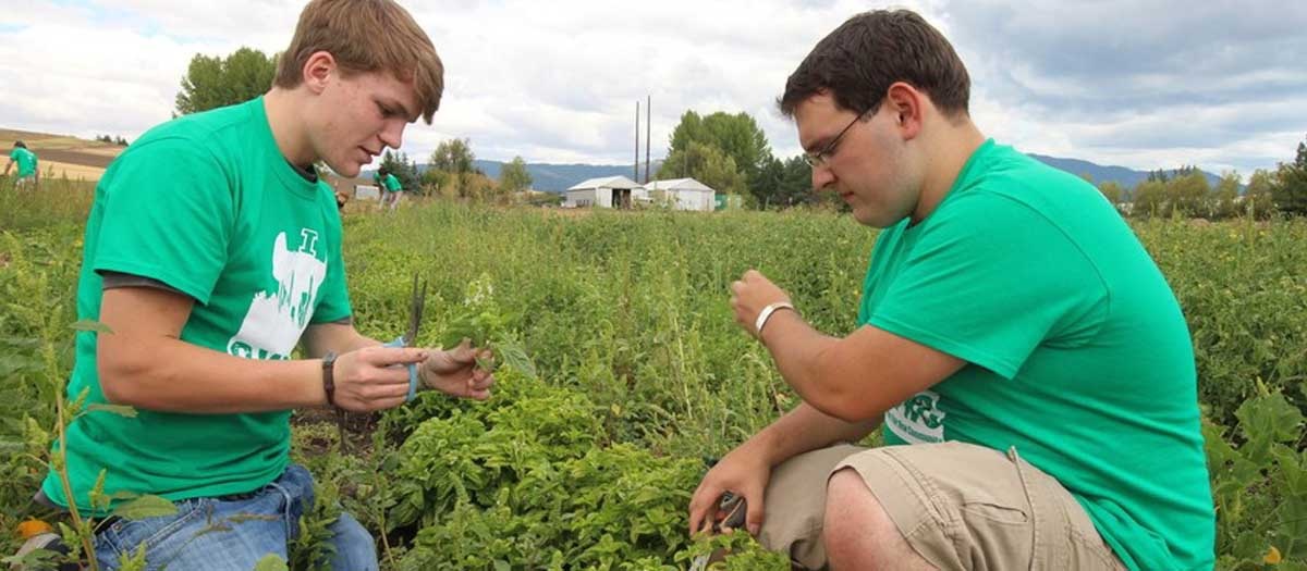 two students checking the plant quality