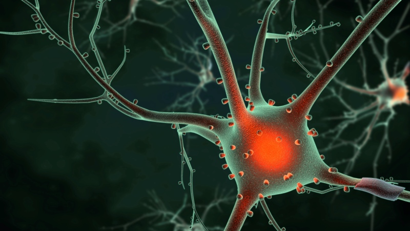 illustration of a brains neurons