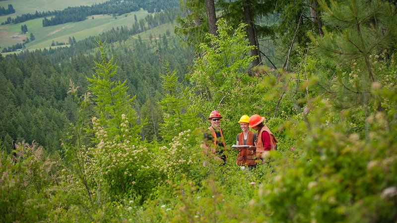 Earn your forestry degree while working in University of Idaho College of Natural Resources' experimental forest holdings. Practice your education in forest resources and participate in research as an undergrad.