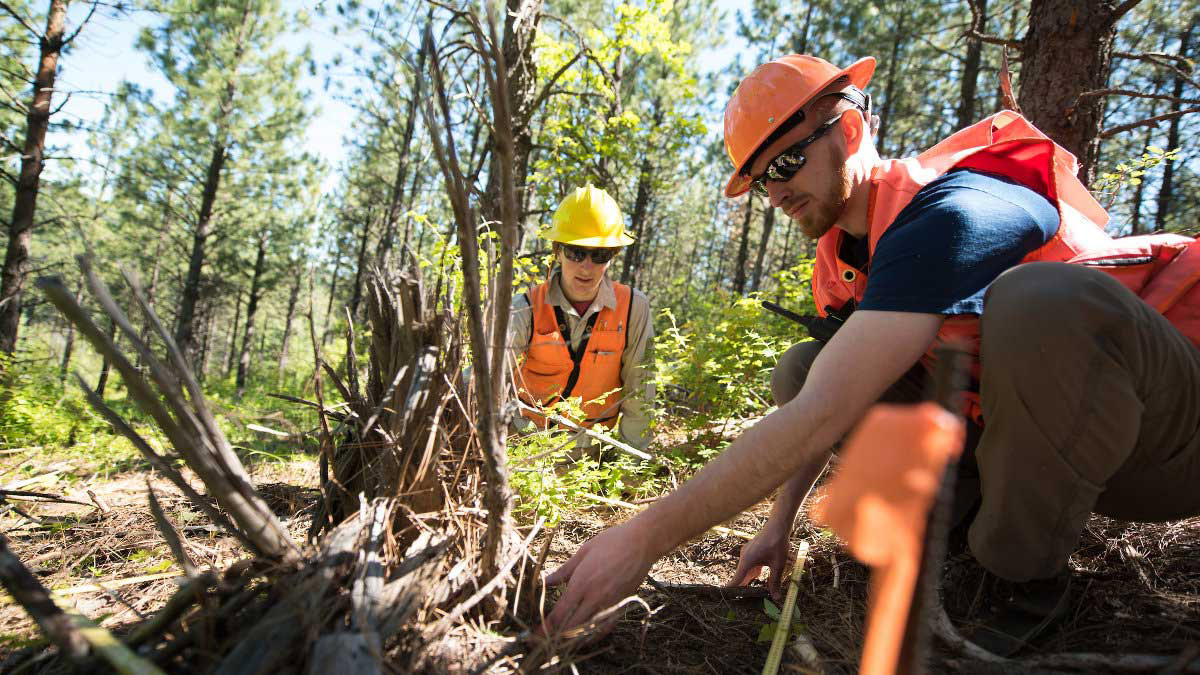 the natural resource conservation degree at the university of idaho studies the relationship between people and wild spaces