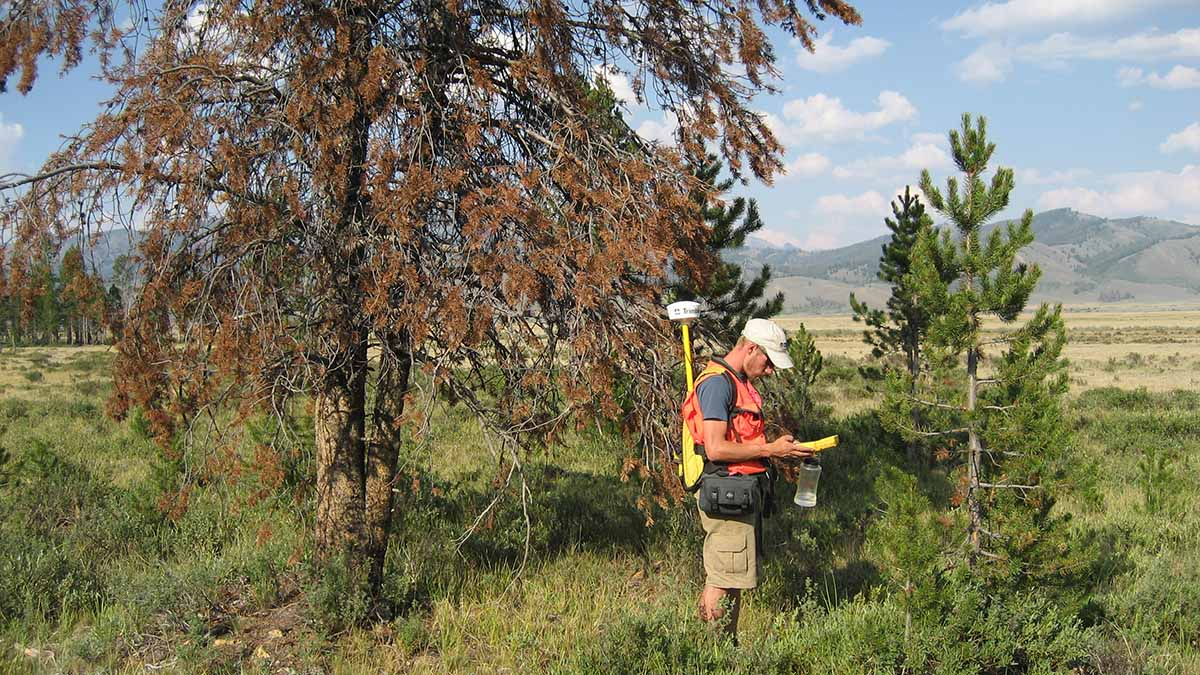 Graduate and undergraduate geography students at the University of Idaho work on a project together.