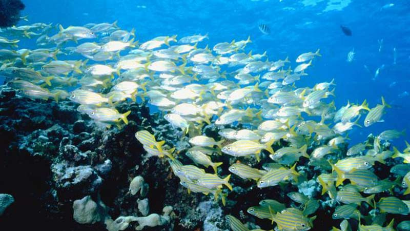 A school of fish swimming near a reef