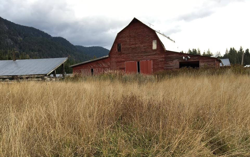A barn with brush in the foreground.