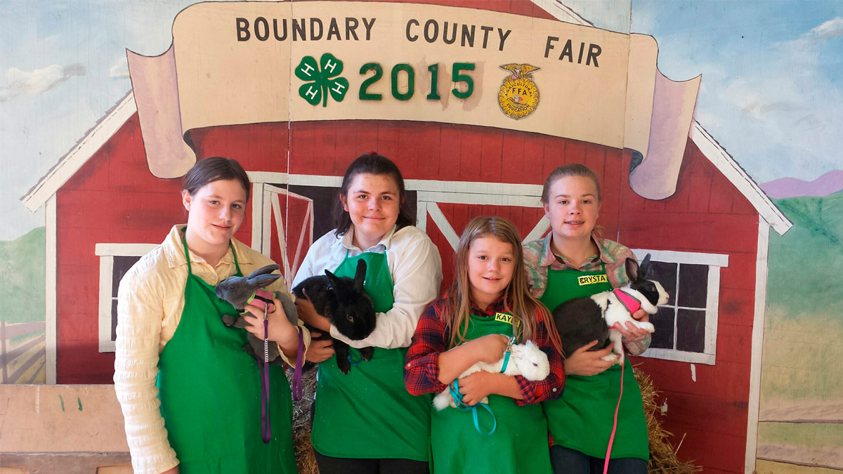 "Four youth hold rabbits in front of a banner saying ""Boundary County Fair 2015"" with 4-H and FFA logos."