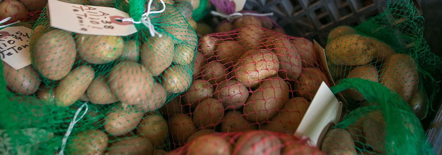 A variety of potatoes being stored.
