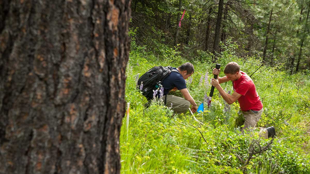 Two students conduct soil and understory research in the UI Experimental Forest